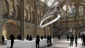 Recreación de la entrada actual del Museo de Historia Natural.