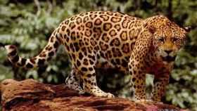 jaguar montemayor valladolid 1