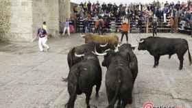 encierro lunes carnaval toro (4)