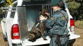 zamora guardia civil perros