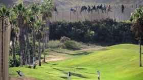 Inmigrantes encaramados en la verja de Melilla frente a golfistas en octubre de 2014.