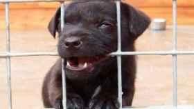 Cachorro de perro en una protectora de animales