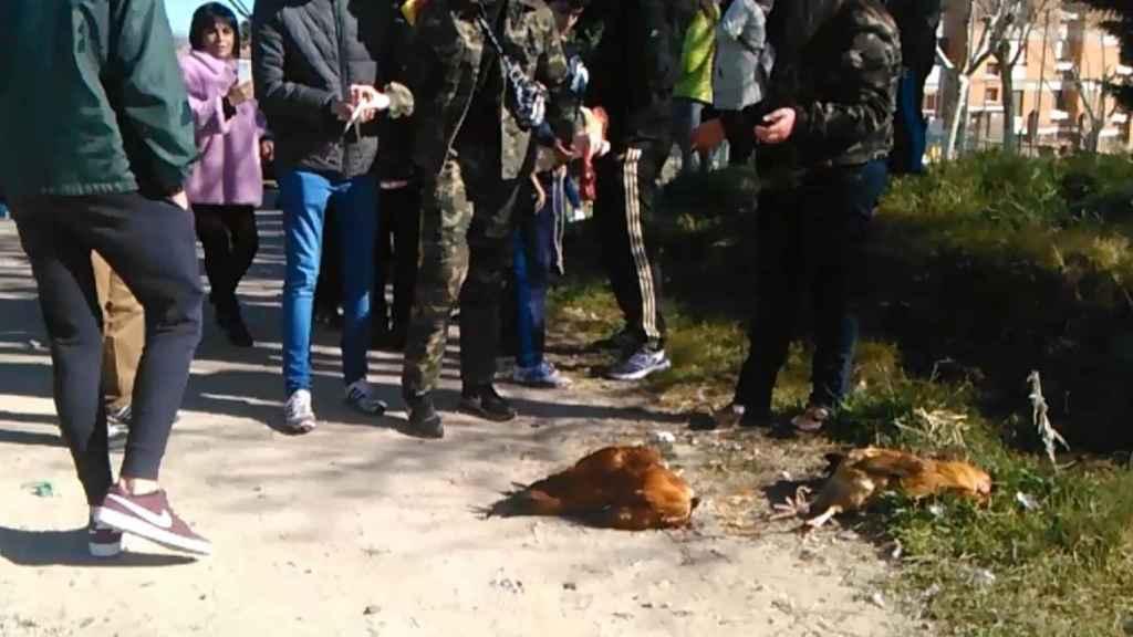Así dejaron los animales al final del sacrificio.