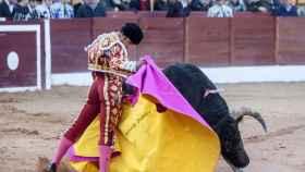 Verónica de Ferrera al primer garcigrande en su reaparición en Olivenza