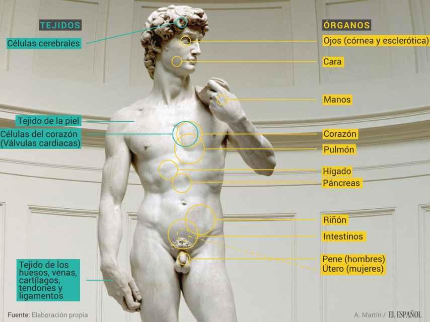 Estos son los órganos que ya se trasplantan