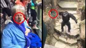 La desafortunada visita de una anciana al zoo.