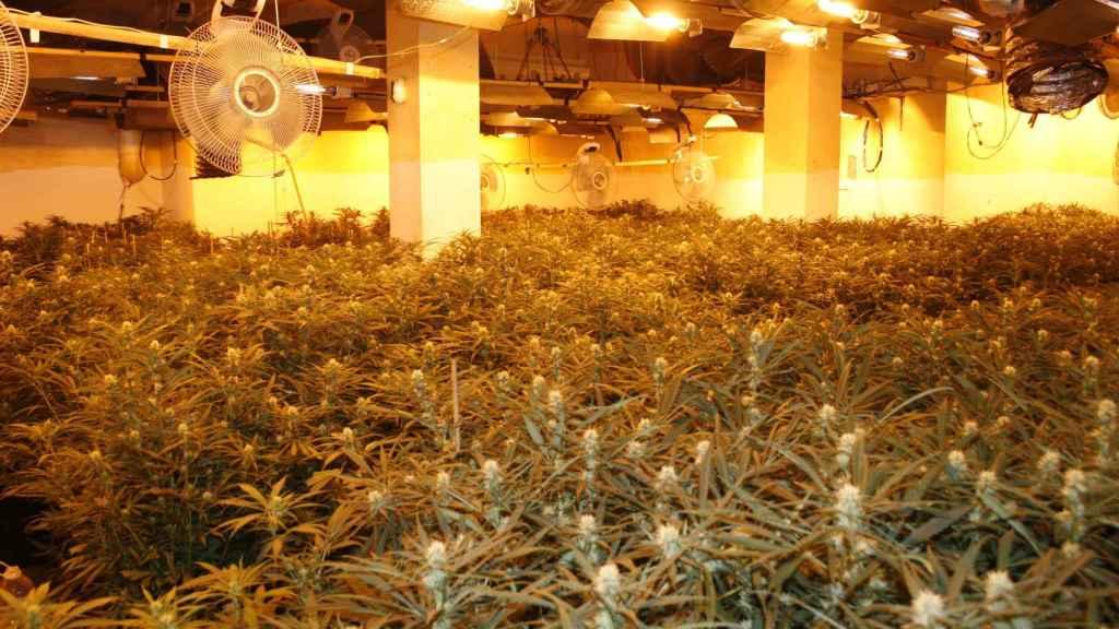 Los narcotraficantes utilizan ventiladores de aire en sus llamadas casas verdes.