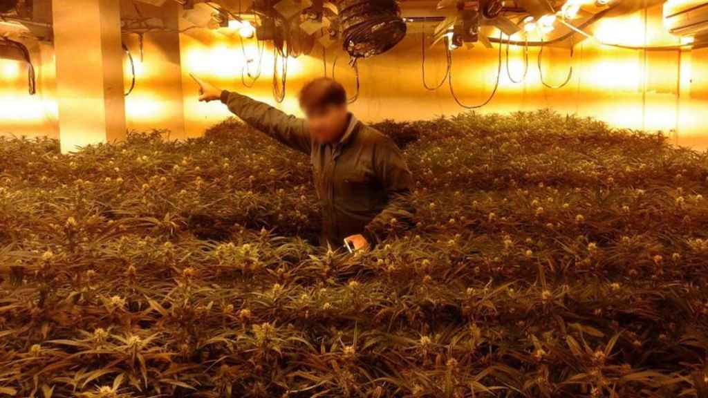 Sanlúcar de Barrameda se ha convertido en un avispero de casas de la marihuana.