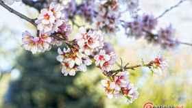 Valladolid-Primavera-Flores-Color-Reportaje-1