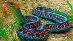 Una serpiente de liga roja