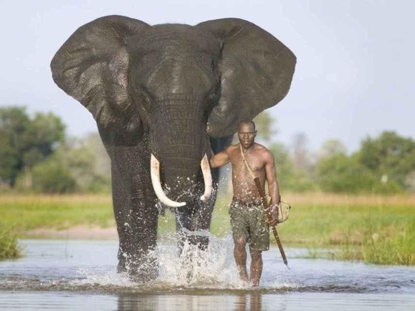 El elefante es uno de los símbolos de Botsuana y una atracción para los turistas.