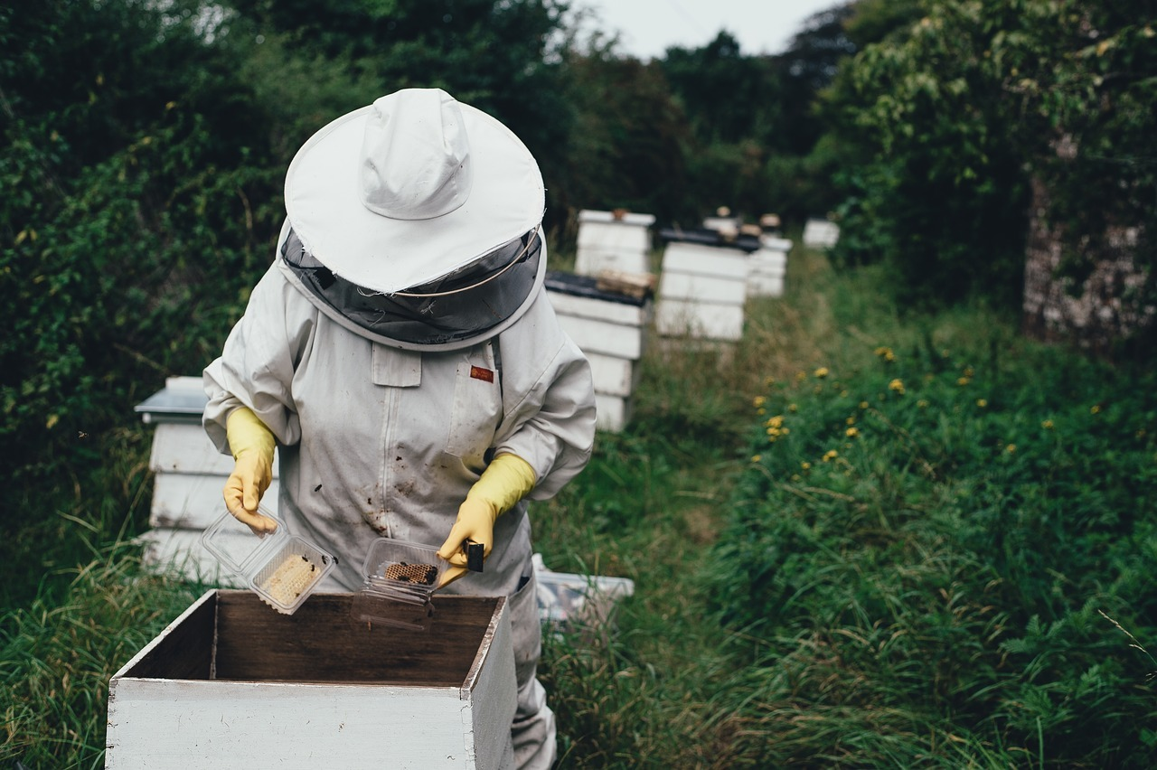 miel pura de verdad 1
