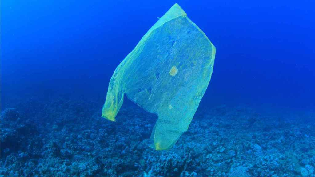 Una imagen que se da en cualquier océano del globo.