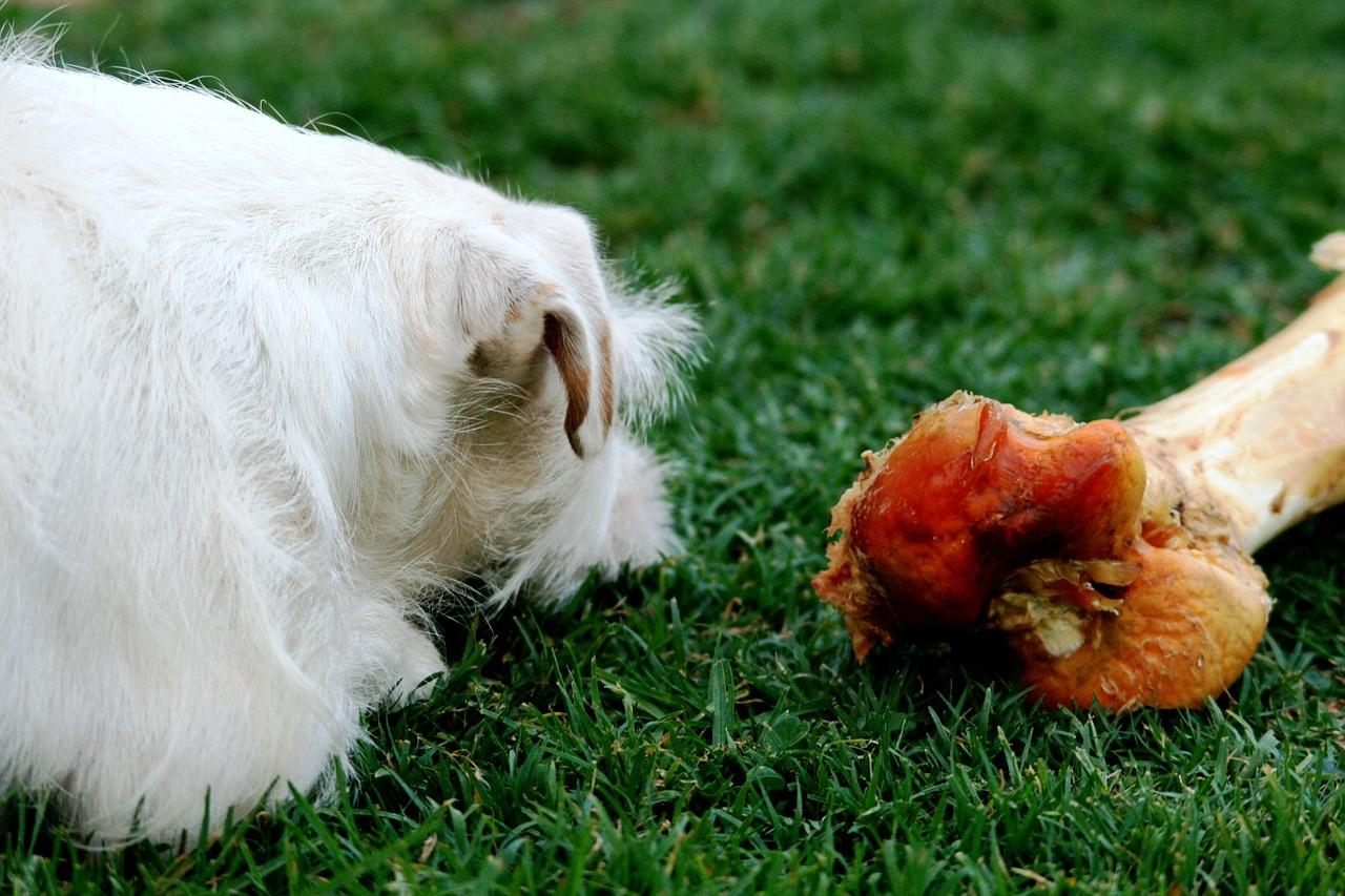 alimentos-prohibidos-para-los-perros-6