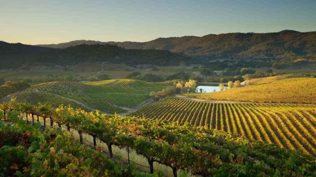 Saint Supery Estate Vineyards & Winery propiedad de la familia Wertheimer. | Foto: cortesía de la marca.