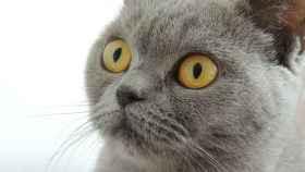 alimentos prohibidos para gatos 1