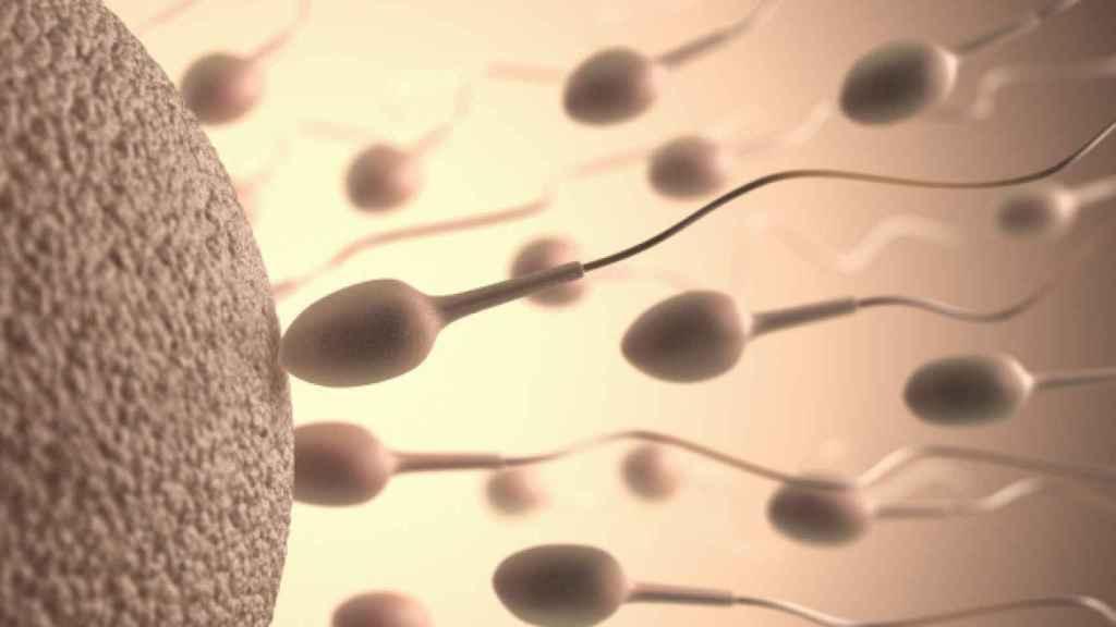 Carrera de espermatozoides para fecundar.