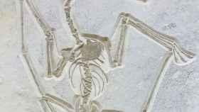 Alemania prohíbe a Catawiki sacar del país un pterosaurio de 140 millones de años