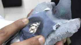 La paloma llevaba una mochila cargada de droga.