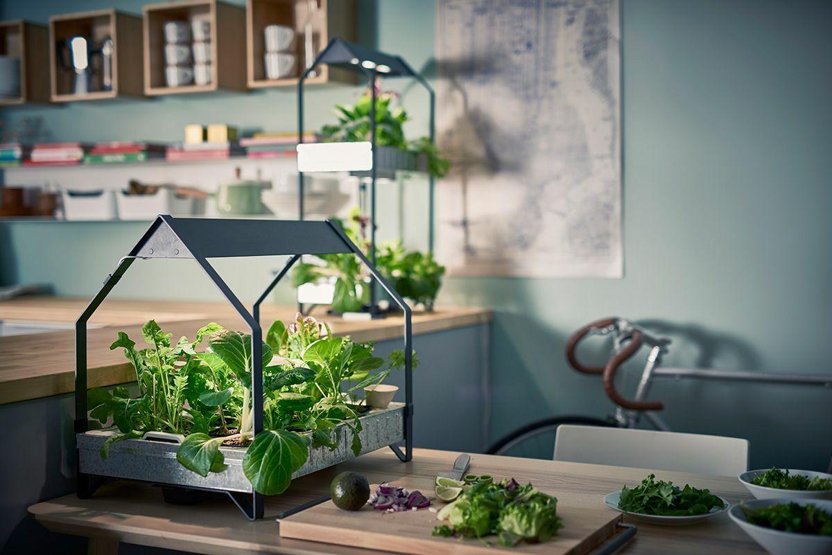decorar-la-cocina-con-plantas-3