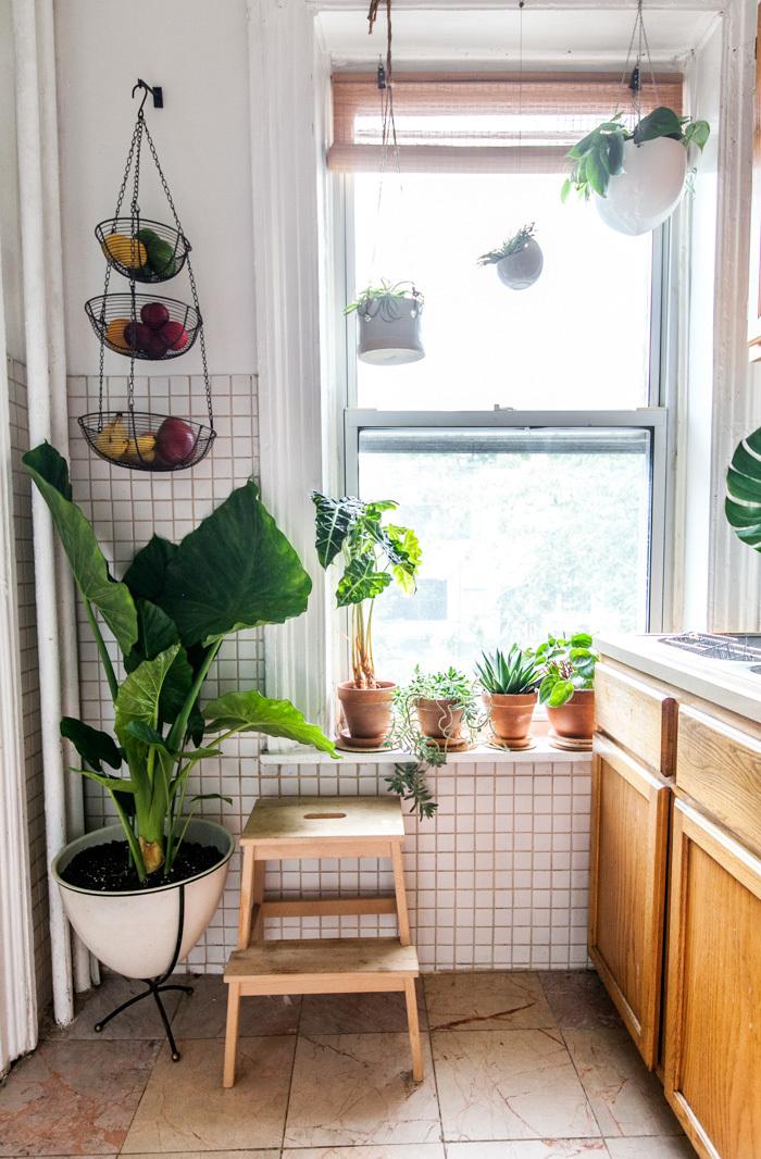 decorar-la-cocina-con-plantas-5
