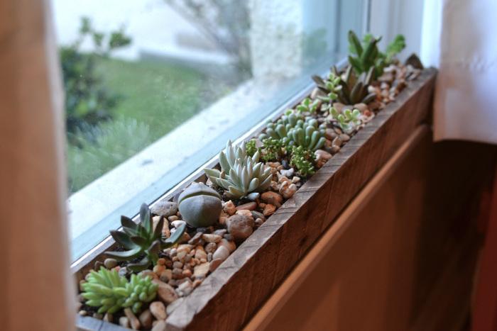 decorar-la-cocina-con-plantas-6