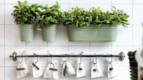 decorar-la-cocina-con-plantas-9