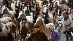 Yegüeros conduciendo el ganado en el camino hacia Almonte.