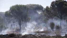 Un pinar con rescoldos todavía humeantes en el espacio protegido de Doñana