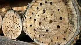 madera-insectos-libre-derechos