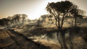 Paraje de Cuesta Maneli tras el incendio declarado el pasado sábado.
