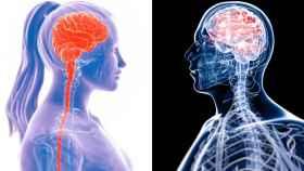 Representación gráfica del cerebro de una mujer y un hombre.