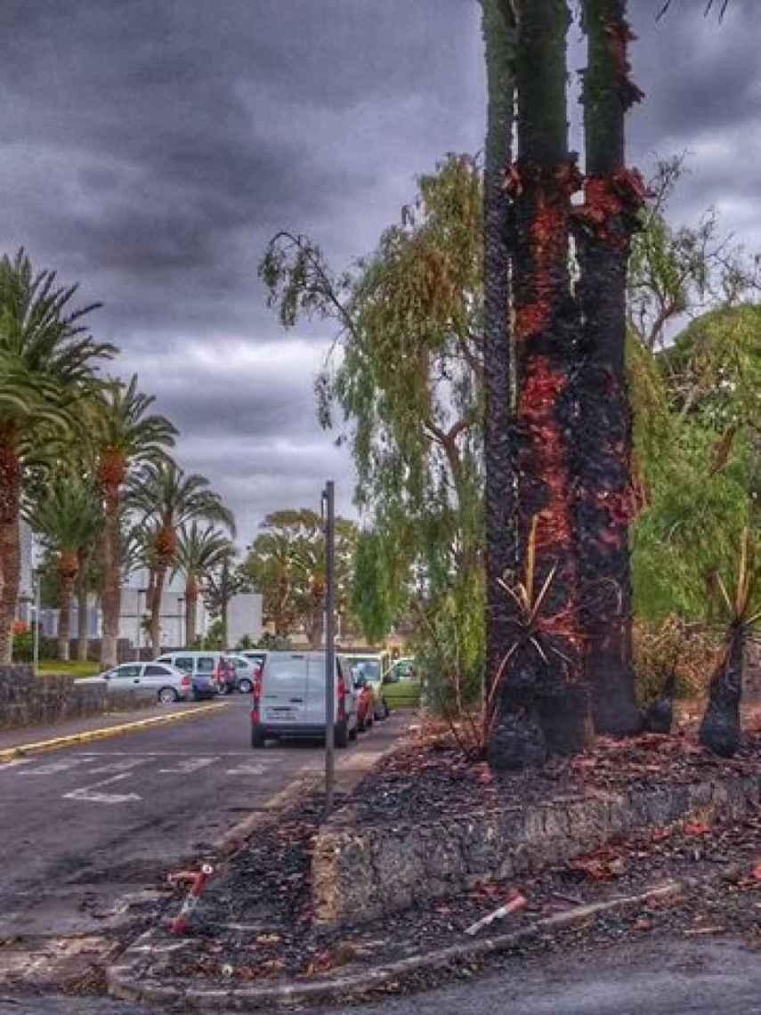 El fuego destrozó parte de una de las avenidas principales el año pasado. La zona sigue calcinada