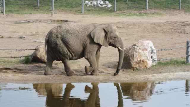 Un elefante mata a un turista español en un parque natural de Etiopía