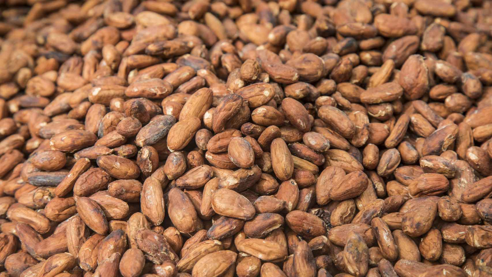 Los olmecas fueron los primeros que domesticaron y utilizaron la semilla de cacao hace más de 3.000 años