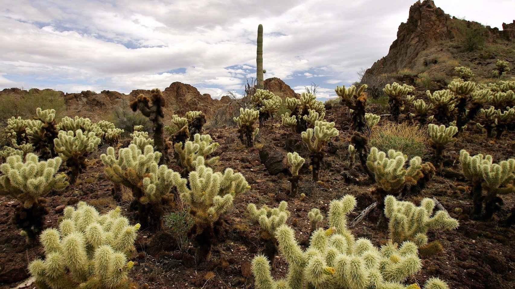 El oasis de los cactus está en Madrid
