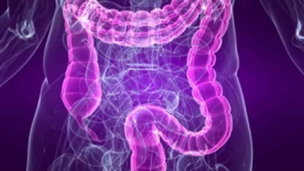 Ilustración del intestino grueso.