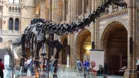 El Museo de Historia Natural de Londres es uno de los más reputados en todo el mundo.