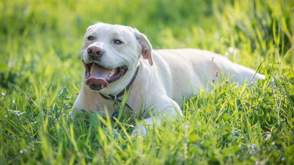 Otra imagen del perro.