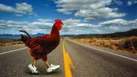 Este pollo con zapatillas sí se atrevió a jugarse el pellejo.