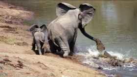 Elefante protegiendo a su cría