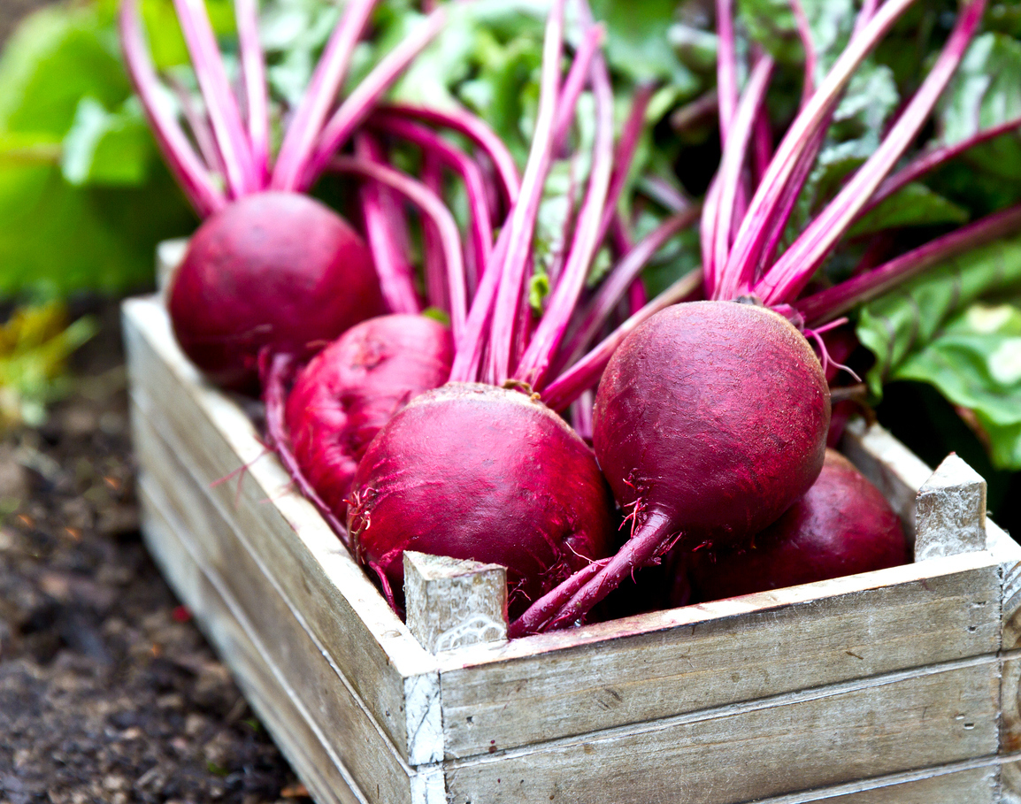 Fresh beetroots in wooden tray. Beet with leaves.
