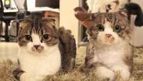 Gato real y gato de peluche