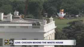 Chicken Don, tras la Casa Blanca.