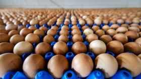 Vista de una producción de huevos de una granja en de Holanda.