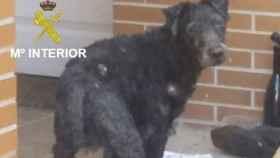 Burgos-perro-maltrato-animal