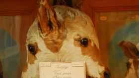 La doble cabeza de Janus, expuesta en el Museo Fragonard.