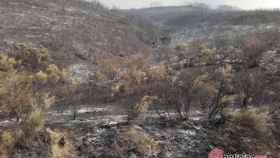 Foto Encinedo quemado