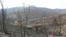 Foto arbolado quemado Encinedo