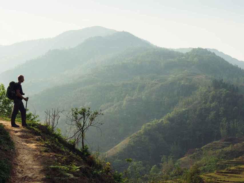 Pasear por un bosque disminuye los niveles de hostilidad y depresión.